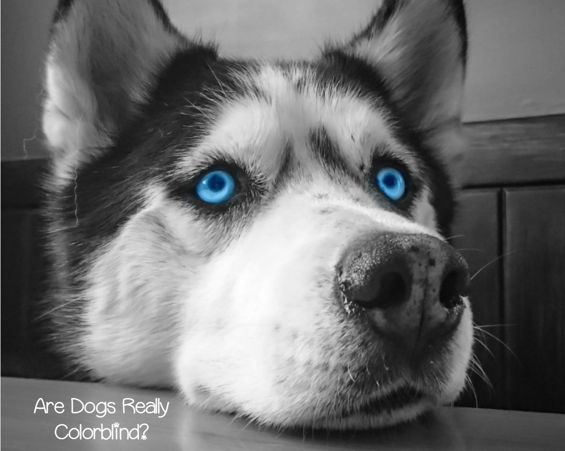 Are All Dog Breeds Color Blind