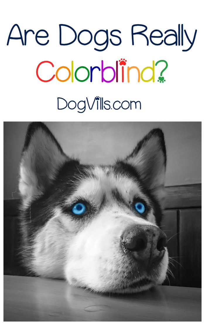 Is it True that Dogs are Colorblind?