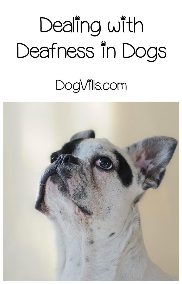 Deafness in Dogs – How to Spot it and Work Around It