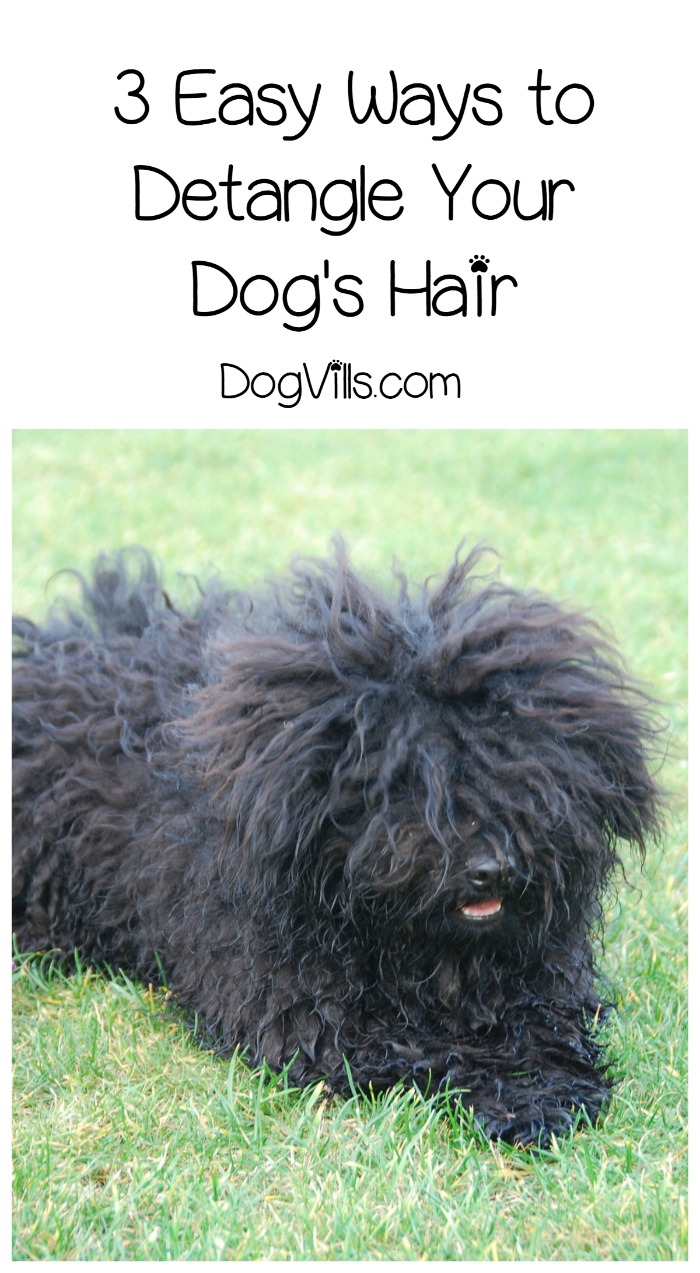 How to Detangle Dog Hair the Easy Way