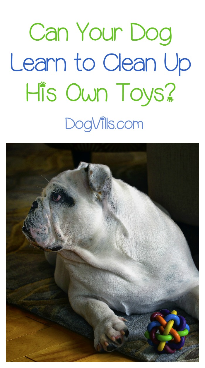 Can a Dog Clean Up His Toys?