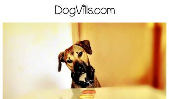How do I know if my dog is hungry? Am I underfeeding him? These are dog health questions we ask ourselves as pet parents. Here are the answers!