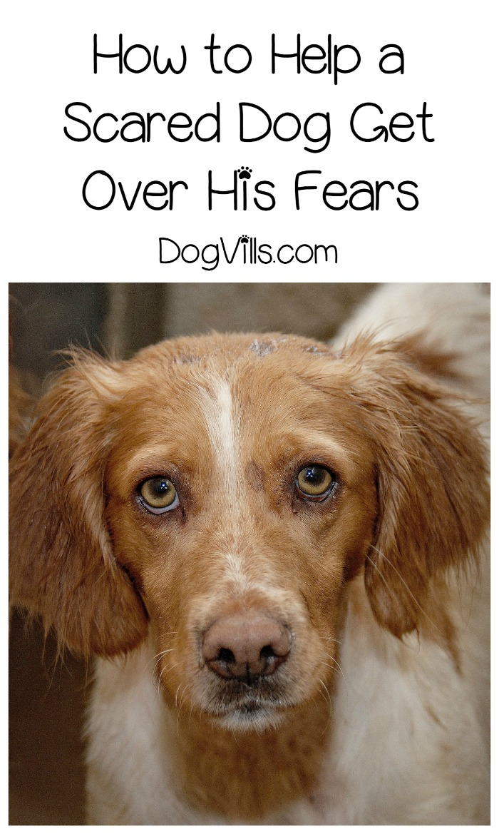 "Dealing with a ""Scaredy Cat"" Dog"