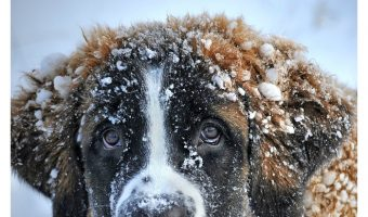 Wondering how to tell if your dog is cold? Check out these dog health tips & keep Fido from freezing this winter!