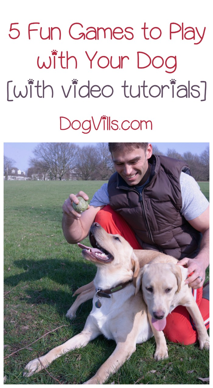 5 Fun Games to Play With Your Dog [with video tutorials]