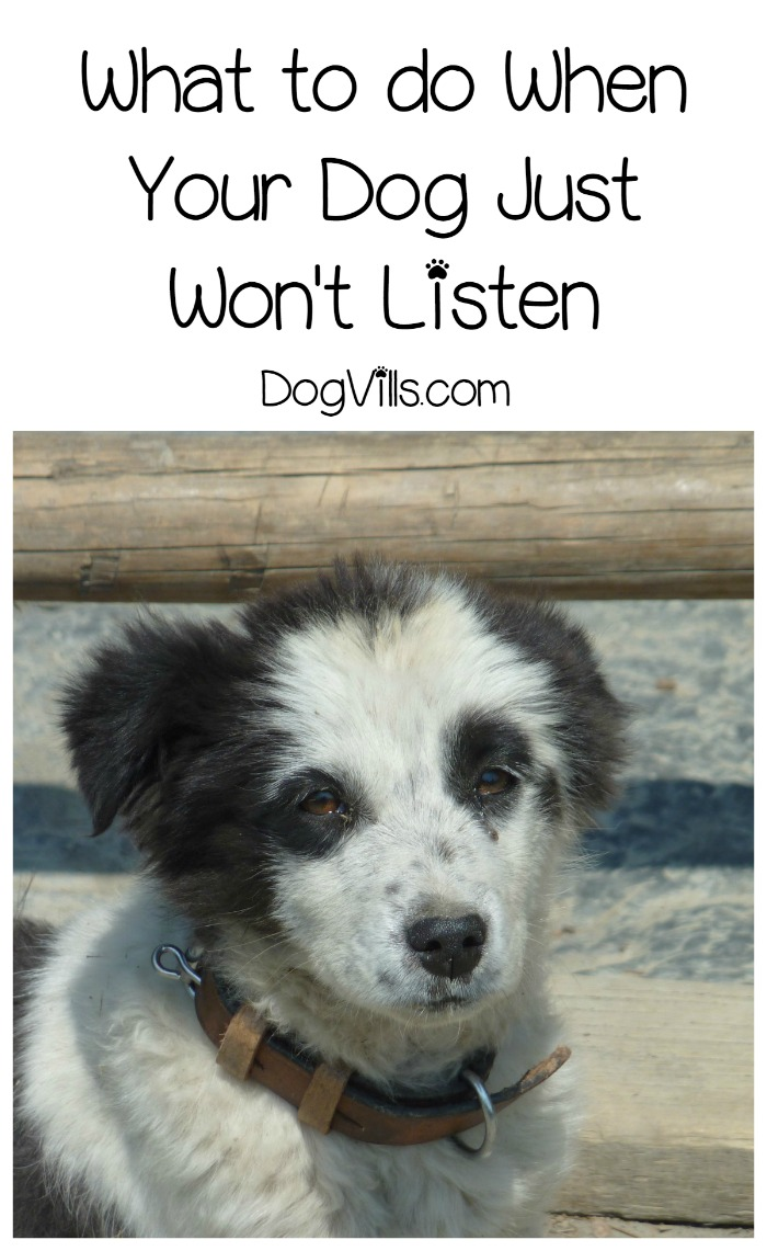 What to Do When Your Dog Just Plain Doesn't Listen