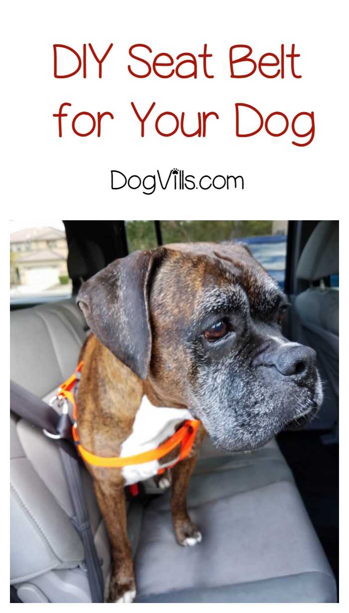 DIY Dog Seat Belt for Keeping Fido Safe in the Car (With Video)