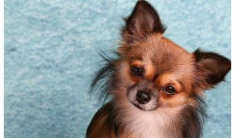 5 of the Best Crates for Small Dogs That You've Been Looking For