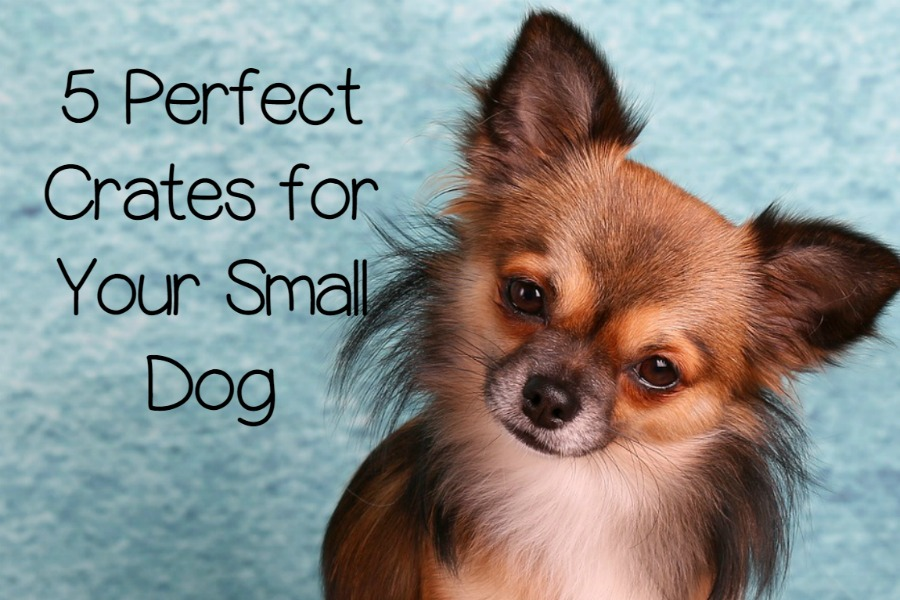 5 Of The Best Crates For Small Dogs That You Ve Been