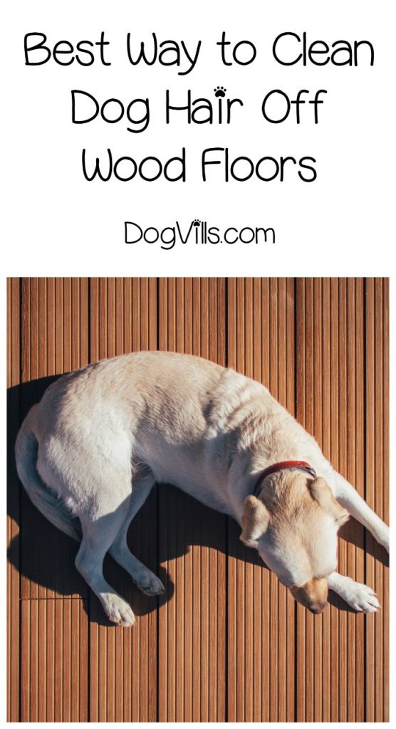 Best Ways To Clean Dog Hair Off Hardwood Floors Dogvills