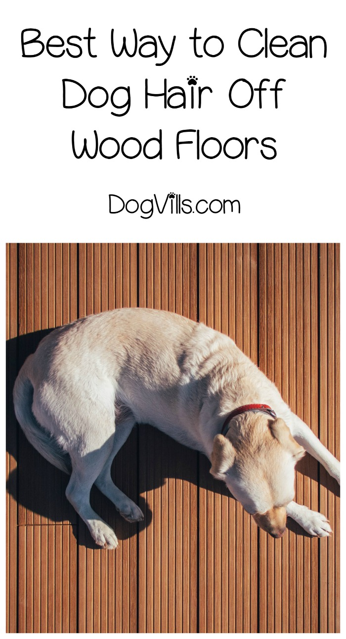 The Best Ways To Keep Your Hardwood Floors Clear Of Dog Hair