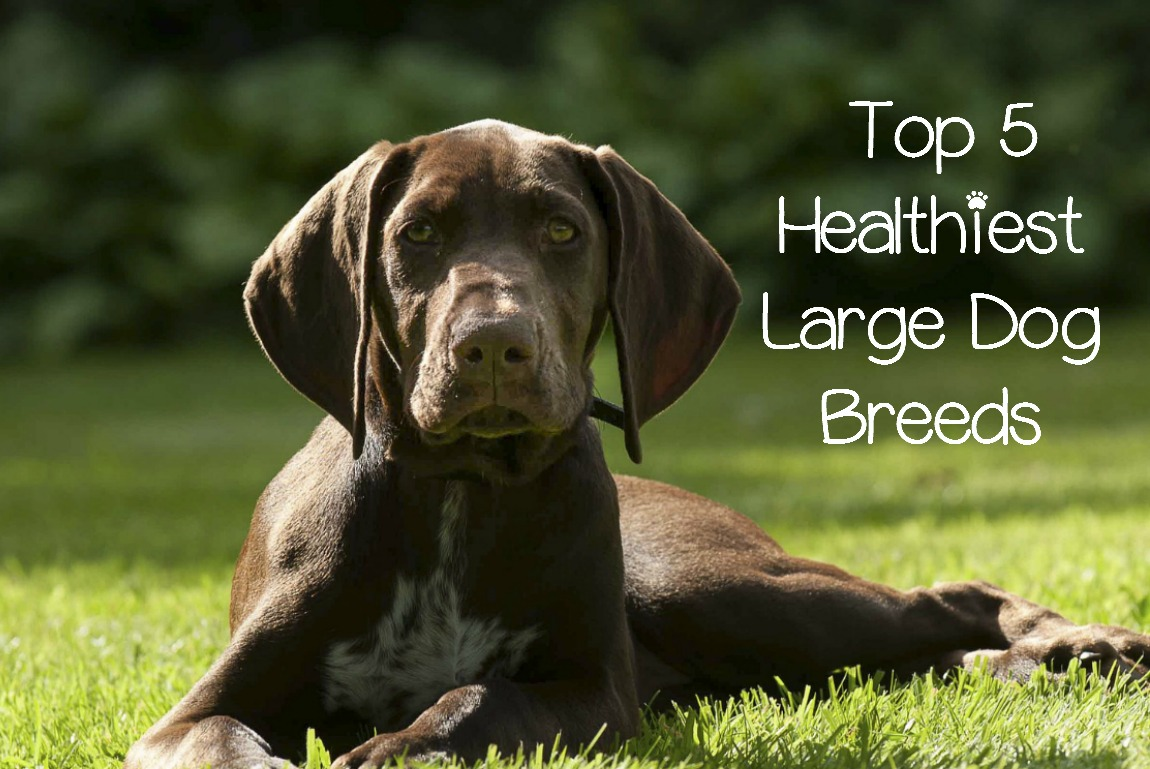 Is Dog Food Healthy For Dogs