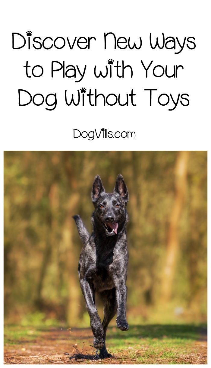 Discover New Ways to Play With a Dog Without Toys