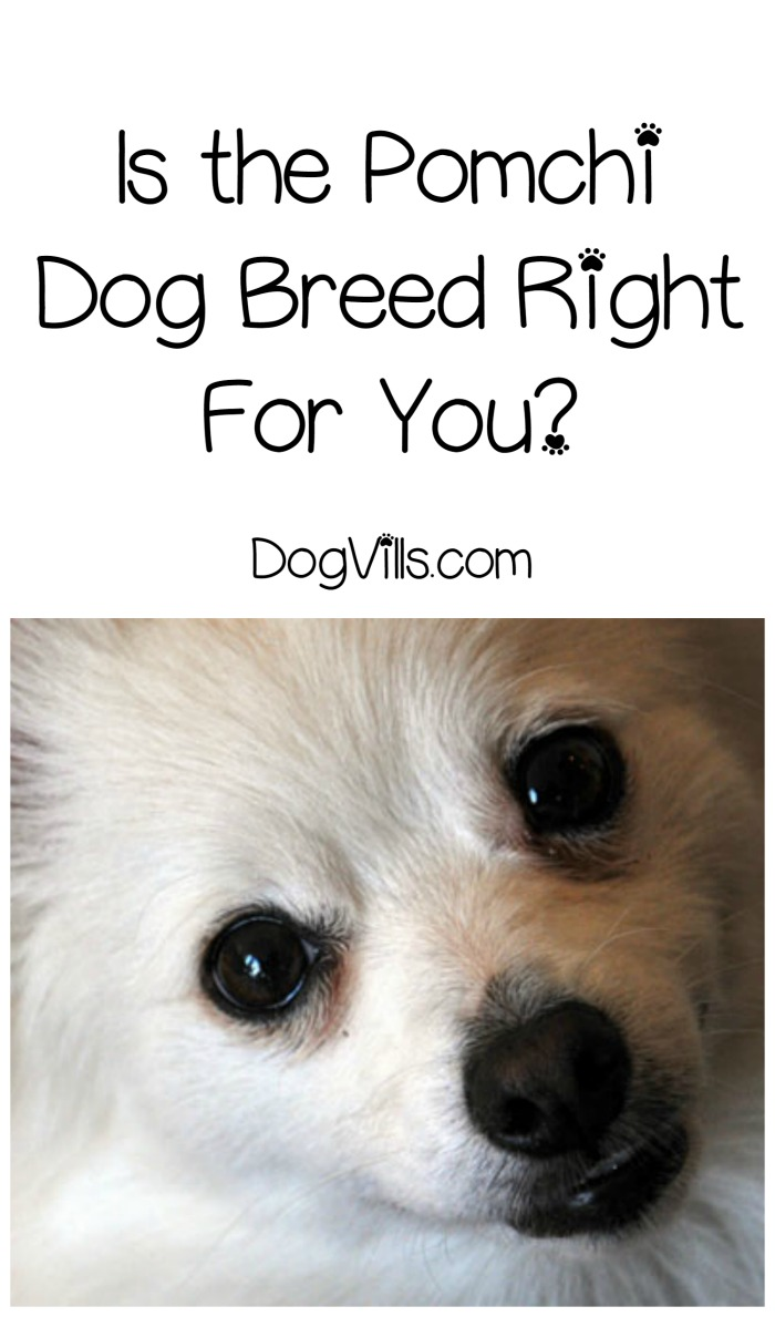 Adorable Cross Breed Dogs