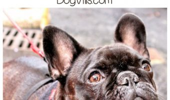 Can a Dog Understand a Name Change?