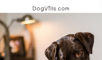 Dogs in Bed – How to Stop Co-Sleeping with Fido