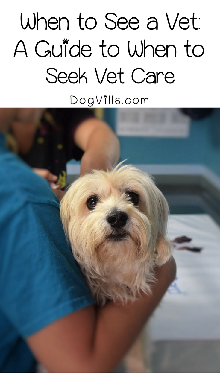 When to See a Vet – A Guide to When to Seek Vet Care