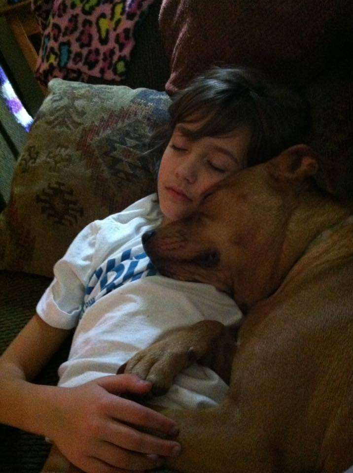 Looking for some super cute & funny dog pictures? Check out these sweet moments that capture 14 times that dogs were family!