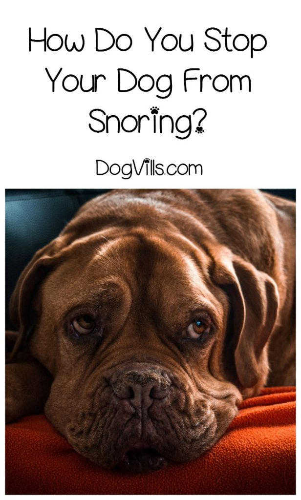 Is It Possible To Stop My Dog From Snoring Dogvills