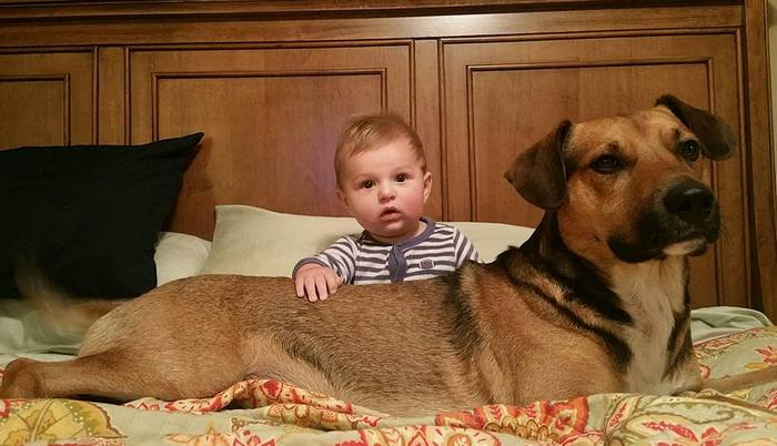 Dogs are family: cute dog pictures of pups with their family