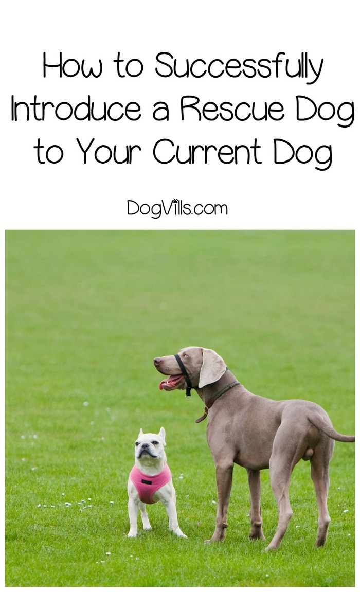 How to Successfully Introduce a Rescue Dog to Your Current Dog