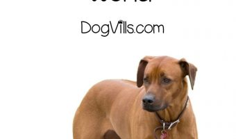 7 of the Most Fascinating Dog Breeds in the World