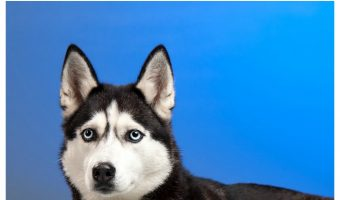 Discover why these pups are the most photogenic dog breeds! Talk about cute dog pictures overload! See it now!