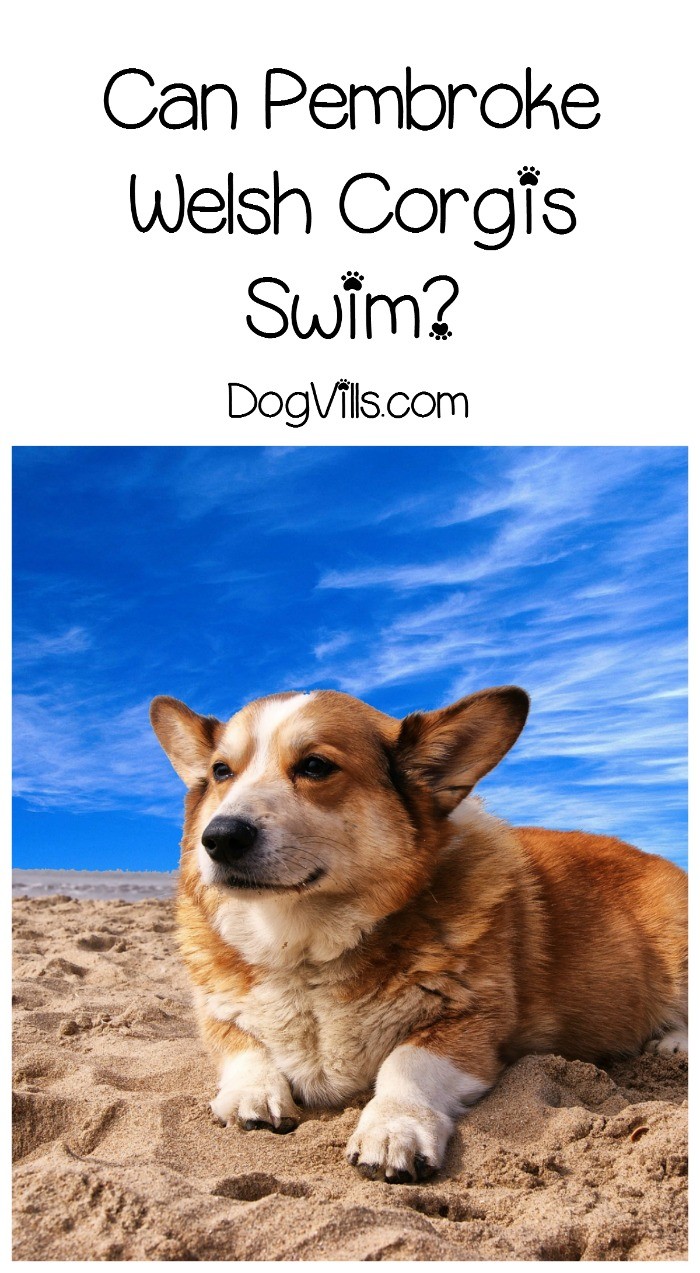 Can All Dogs And Cats Swim