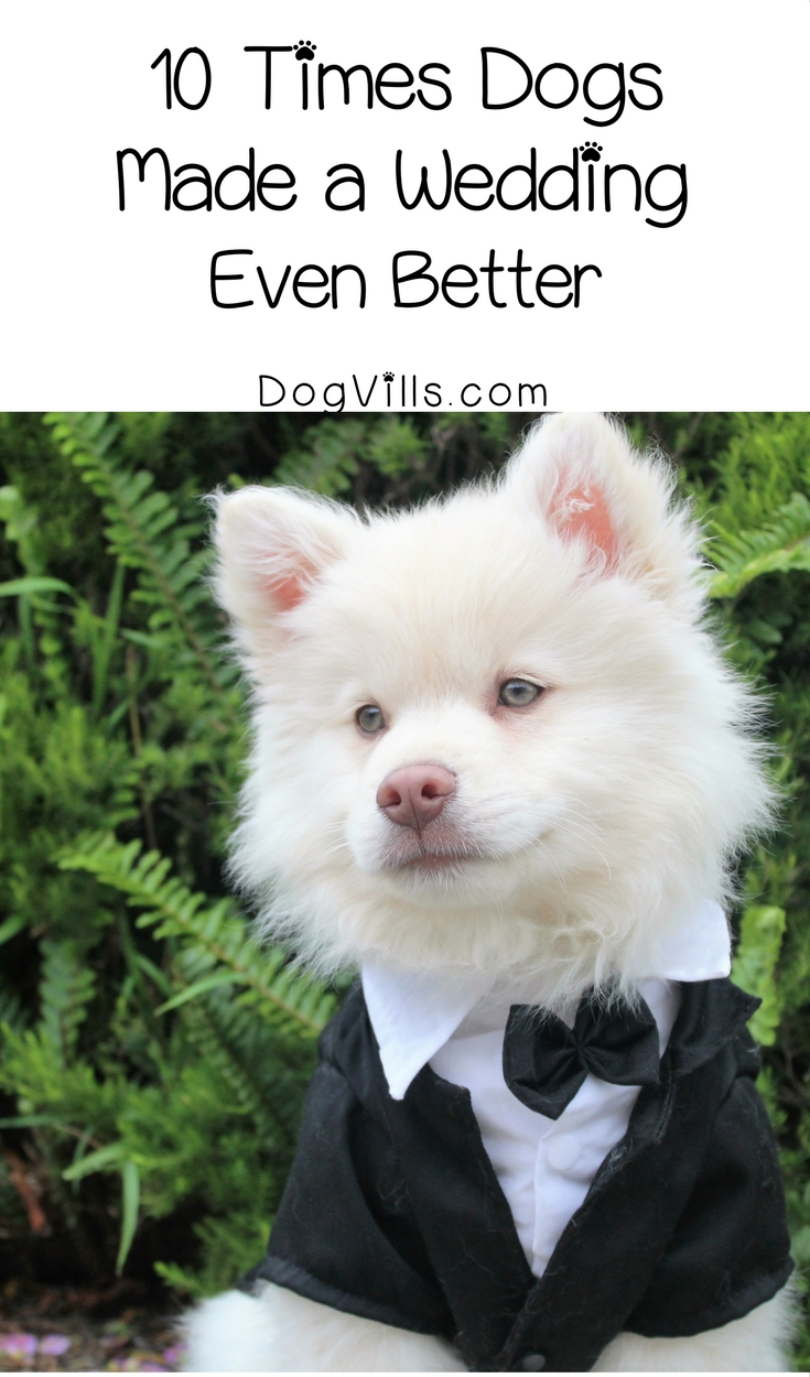 10 Times Dogs Made a Wedding Even Better
