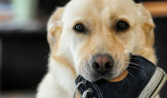 12 Times Dogs Were Obviously Guilty