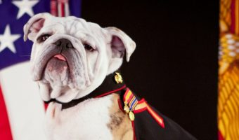 15 Perfectly Patriotic Puppy Names to Show Off Your Love of Country