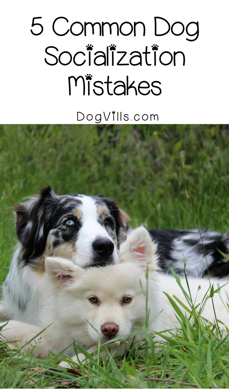 Are you Making These 5 Common Dog Socialization Mistakes?