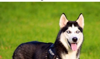 8 of the Best Dogs for an Exercise Enthusiast