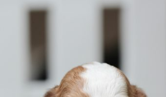 New Dog Owner Checklist – 12 Must Haves