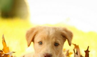 Potty Training a Puppy – The Do's and Don't's