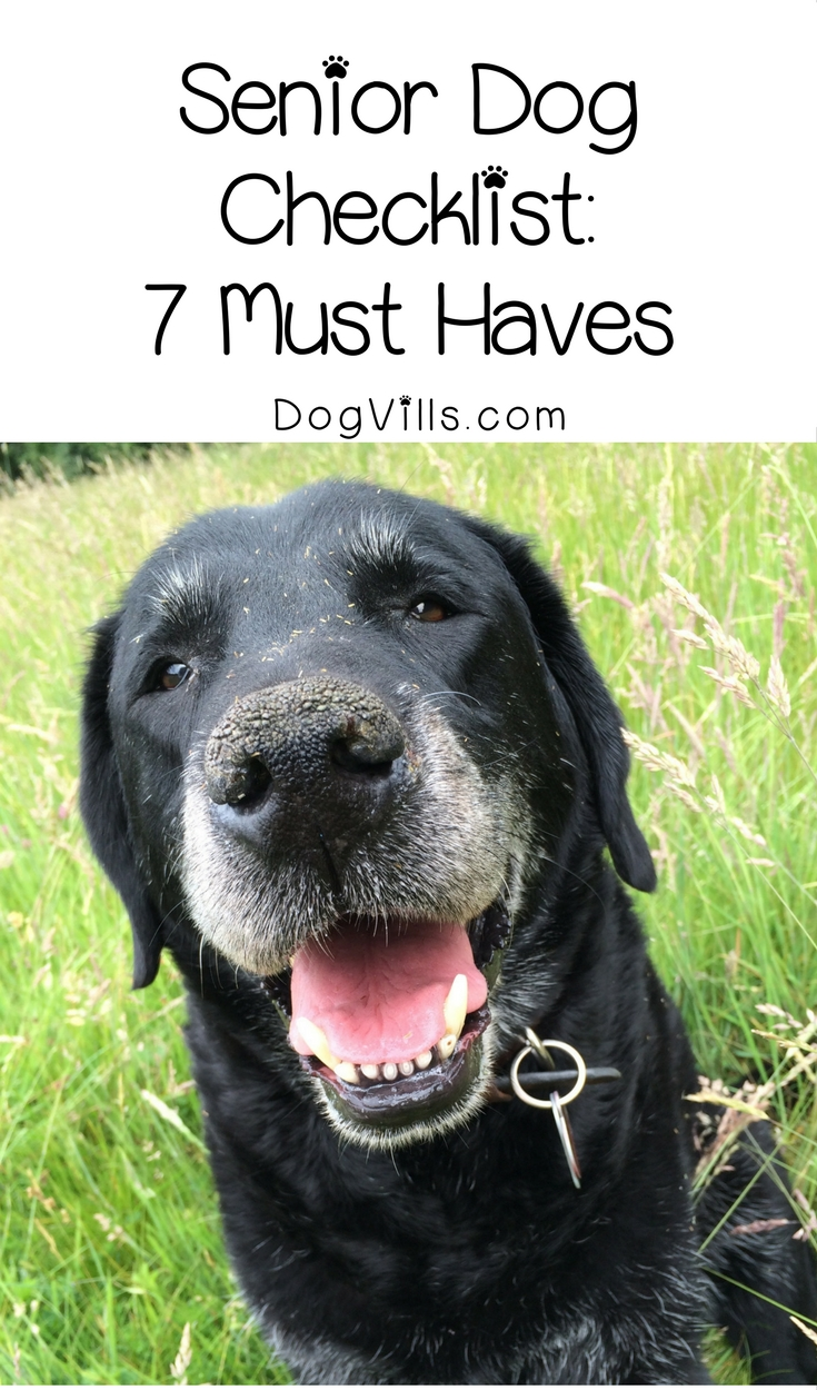 Senior Dog Checklist: 7 Must Haves