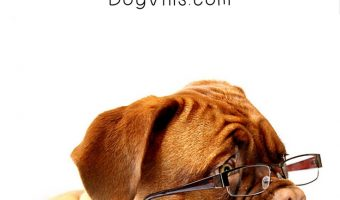 Campus Canines: Should a College Student Get a Dog?