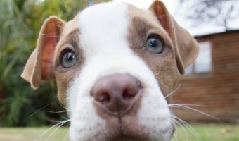 Pitties get a bad rep in so many ways, but these are the five biggest misconceptions about pit bulls. Check them out and help educate others about the breed!