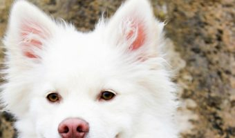 What to Do When Your Dog is In Heat