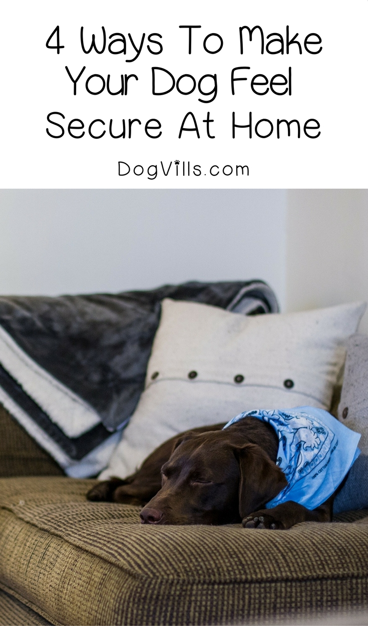 4 Ways to Help Your Dog Feel Secure at Home