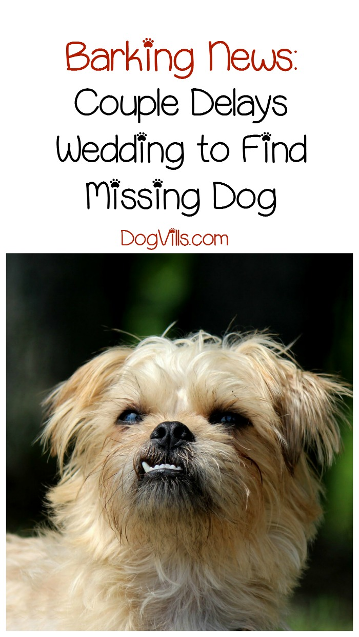 Couple in California Puts Wedding on Hold to Find Missing Dog