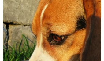 Homemade Dog Food Guidelines:  3 Things You Need to Know Before Trying It