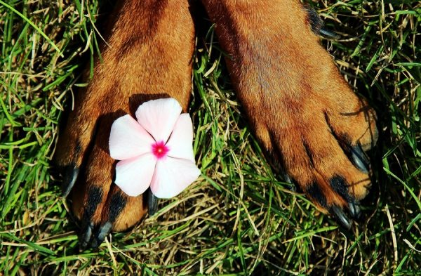 Long nails aren't a good look (or feel!) for Fido. Check out these tips for how to trim your dog's nails at home like a pro!