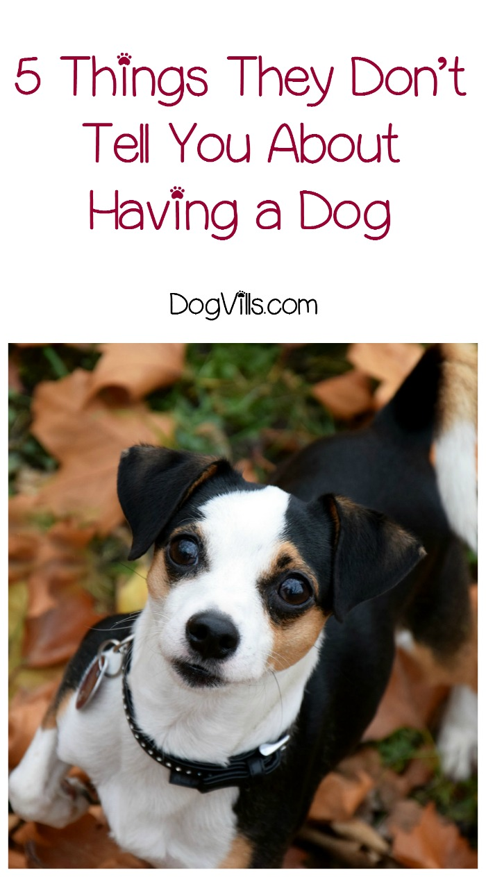 5 Things They Don't Tell You About Having a Dog