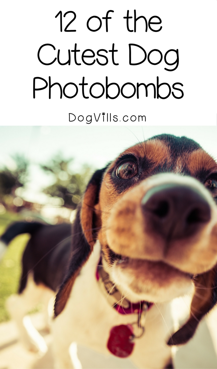 12 of The Cutest Dog Photobombs