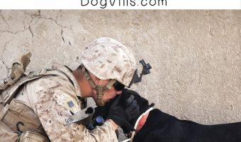 13 Awesome Dog Names Inspired by the Marines