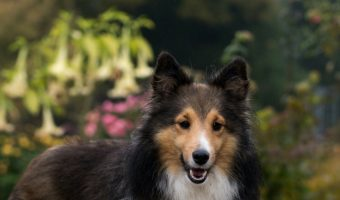 15 Most Popular Female Dog Names For Your New Furry Friend