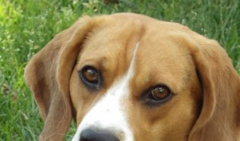 5 Dogs Breeds that Pass the Most Gas…and Why!