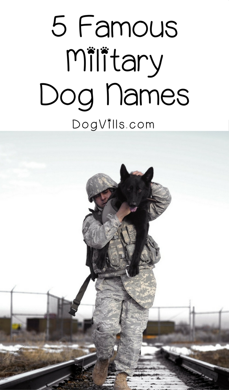 5 Famous Military Dog Names for Patriotic Pooches