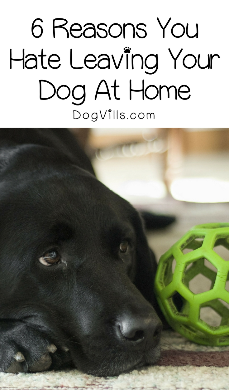 6 Reasons You Hate Leaving Your Dog At Home